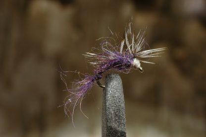 Bristle Back, purple