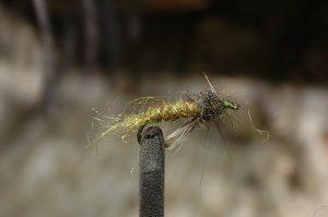 Wonder Fly, olive