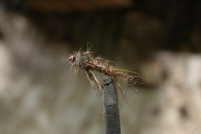Wonder Fly, brown